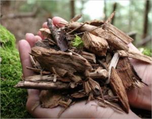 Holzgas-KWK Anlagen: Hände halten Waldrestholz-Hackschnitzel